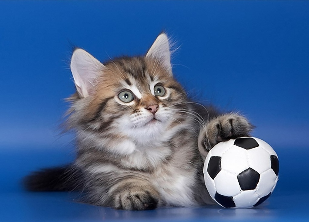 Коты - футболисты