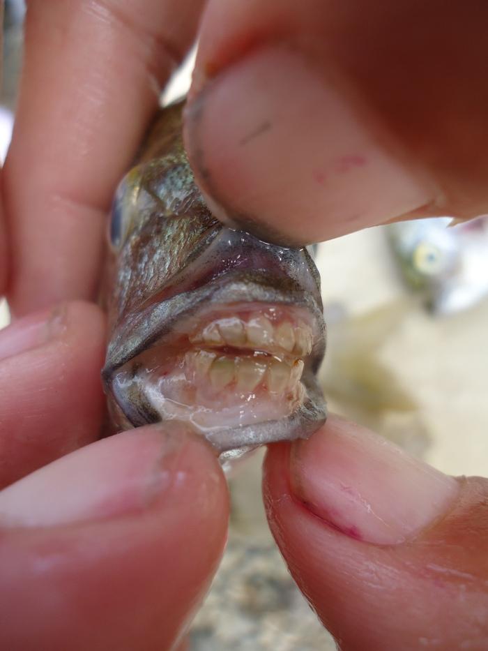 Берегите пальцы в Чёрном море