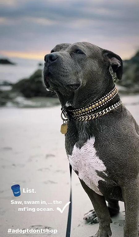 Джастин Теру устроил своему спасенному после урагана псу незабываемое путешествие Стиль жизни,Благотворительность