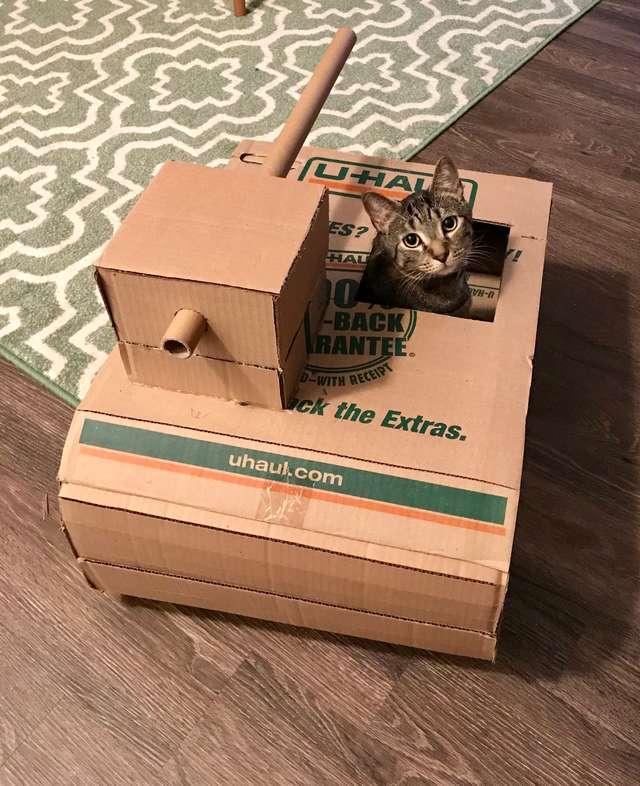 «Ага, присмотрю за котами!» — сказал парень… И начал строить для них танки из картона