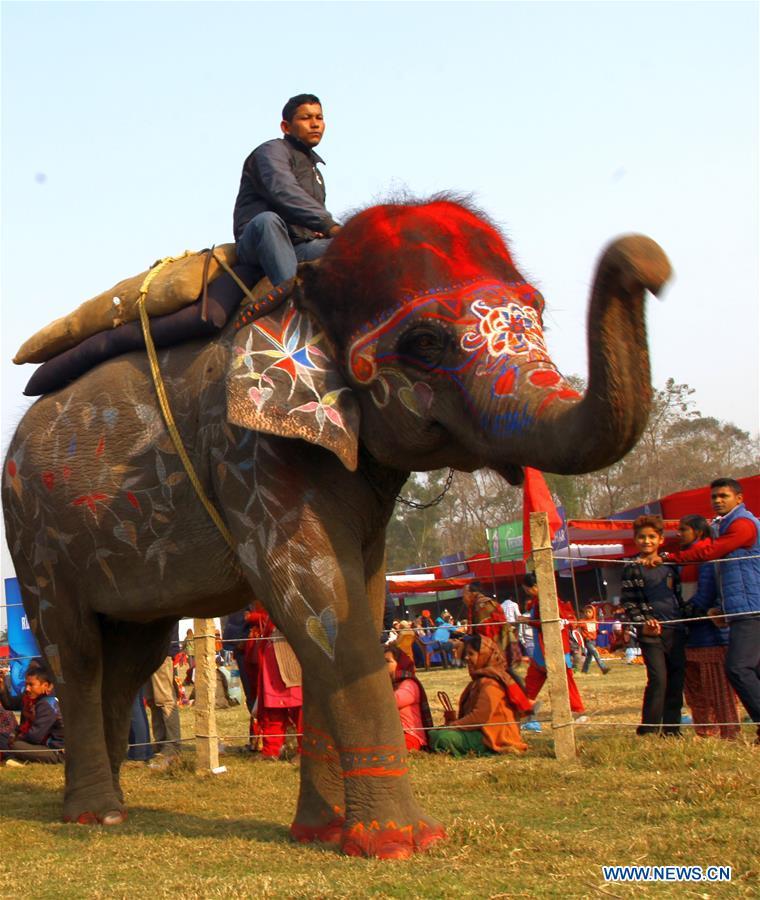 Непал. Победители 15-го конкурса  красоты  среди слонов Дальние дали