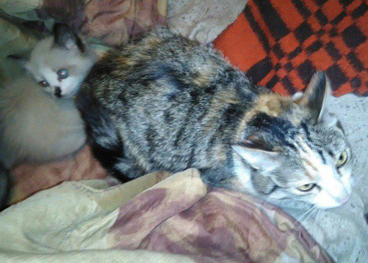 Она боролась за 5 маленьких жизней! Кошка с перебитым позвоночником сумела выкормить котят в заброшенном доме