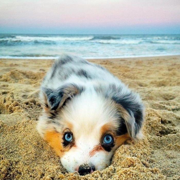 1. Маленький бездельник на пляже животные, настроение, очарование, подборка, собака, фотография, щенок