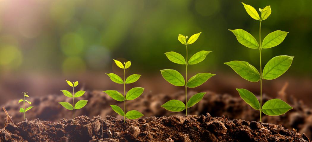 Весь процесс роста растения на видео