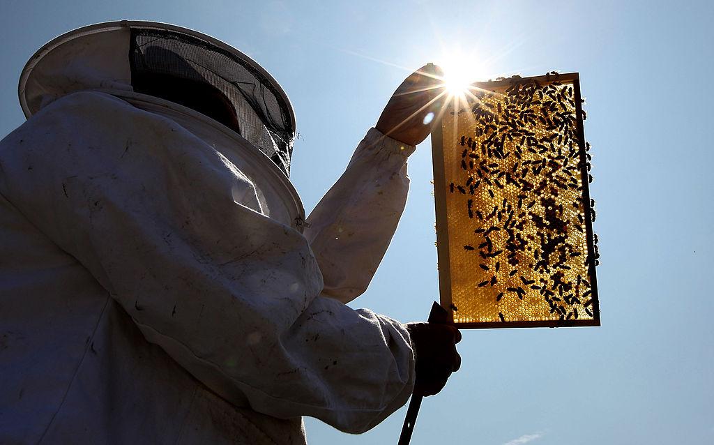 10 важных фактов о пчелах