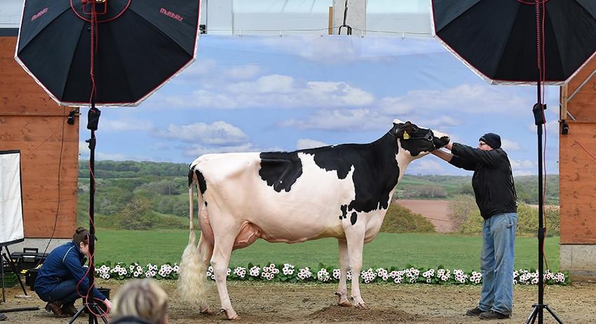 Коровье молоко вызывает восп…