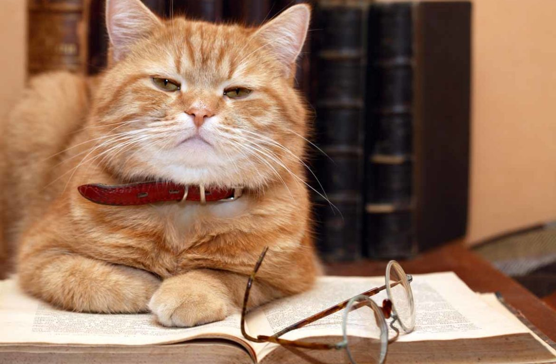 Кошки умные картинки
