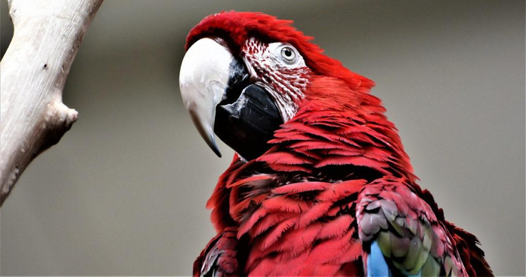 История самого мерзкого попугая в мире