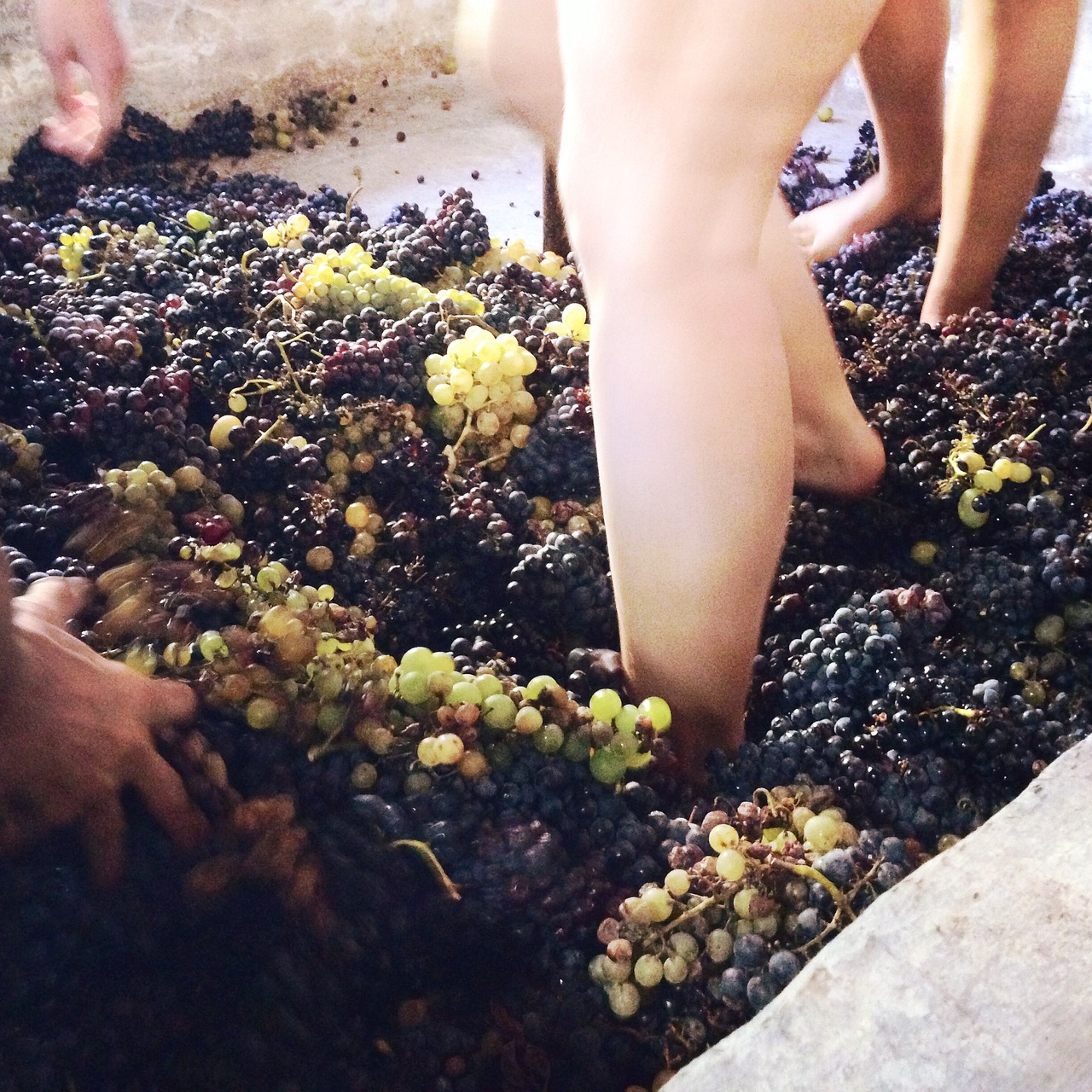 Зачем топтать вино ногами?  Источник: Зачем топтать вино ногами? факты