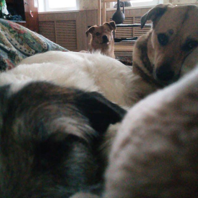 В семье было 5 питомцев, но узнав, что собака их друга осталась сиротой, люди решили забрать и ее истории из жизни