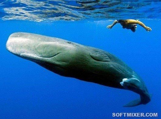 Самое загадочное животное Земли Кашалоты, интересно, необычное, океан, познавательно, тайна. животные