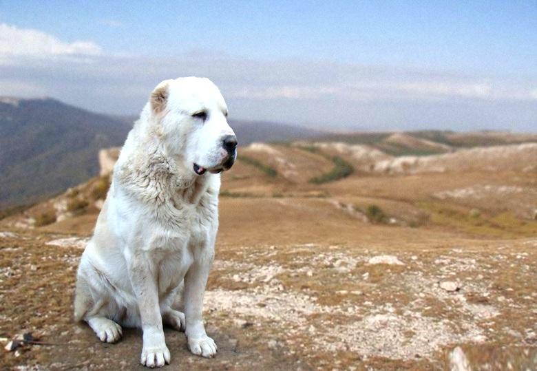Немного о собаках и отношени…