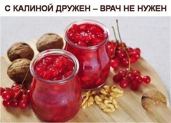 Калина - одна из самых ПОЛЕЗНЫХ ягод в природе.