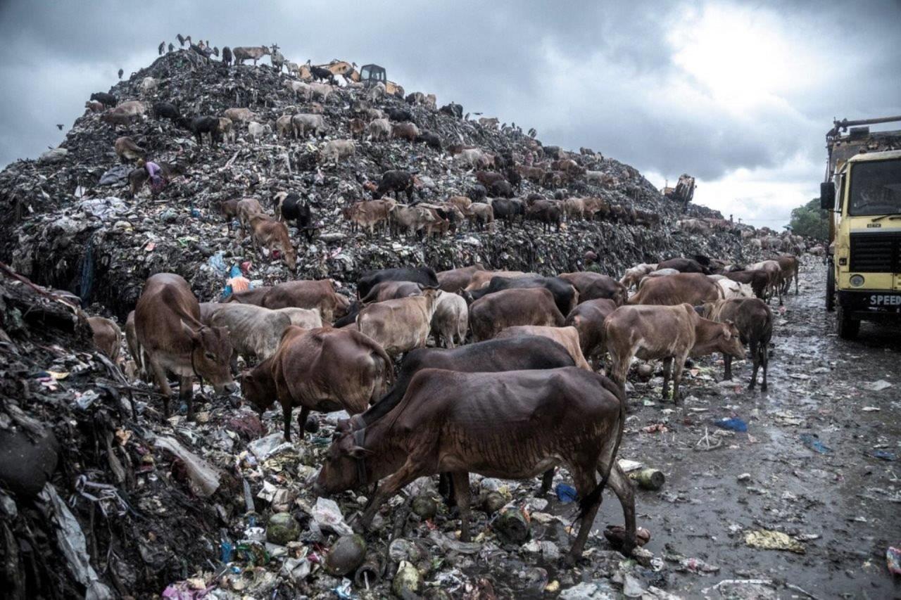 """""""Ядовитая окружающая среда"""", Супратим Бхаттачарджи, Индия. Участник шорт-листа искусство фотографии, окружающая среда, охрана природы, победители конкурса, фотоконкурс, фотоконкурсы. природа, экологические проблемы, экология"""