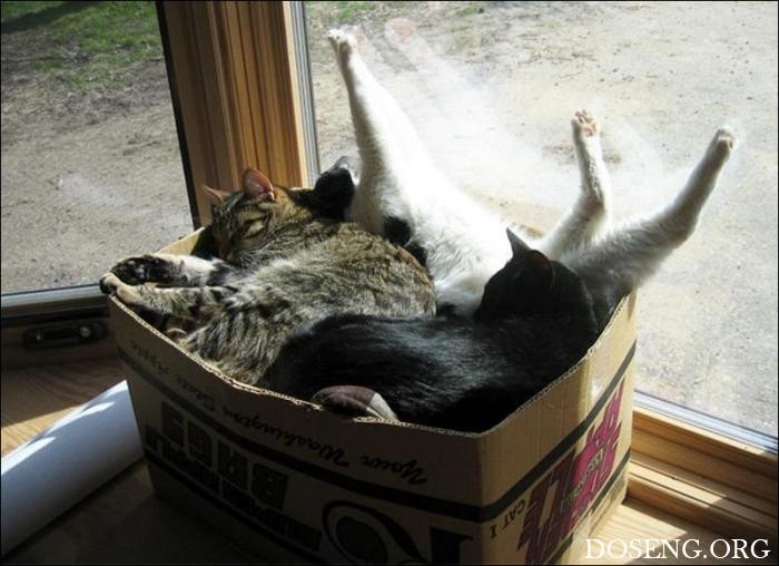 Коты стремятся заполнить соб…