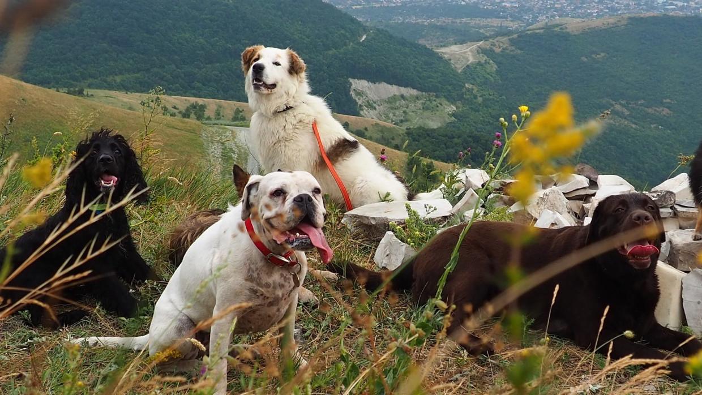 Американские власти запретили ввоз собак из более 100 стран Политика