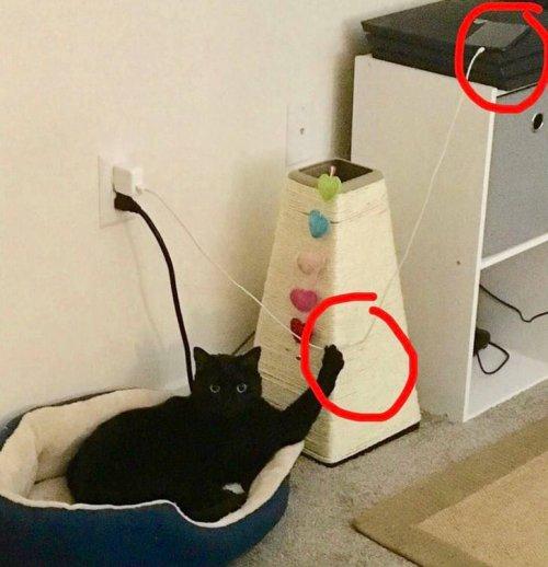 25 фото, которые рассказывают о тайной стороне жизни с котами