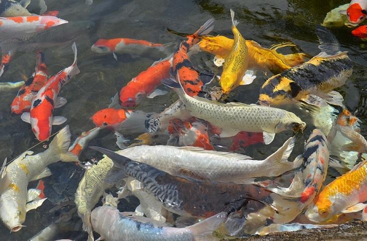 12 видов популярной рыбы, которую нельзя есть вообще