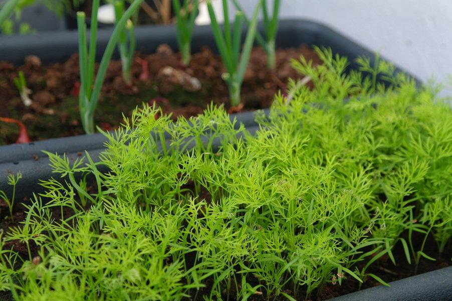 Балкон, веранда, патио в цветах: серый, темно-зеленый, салатовый. Балкон, веранда, патио в стиле экологический стиль.