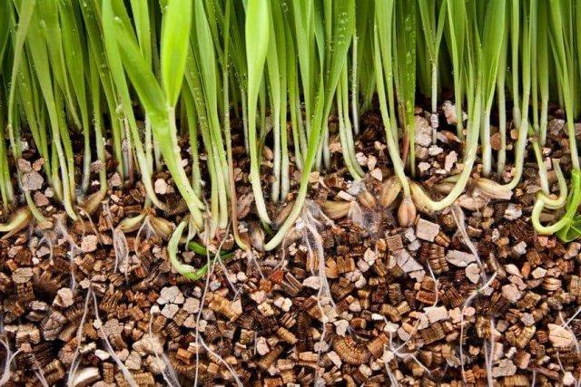 Что такое вермикулит и как его правильно использовать?