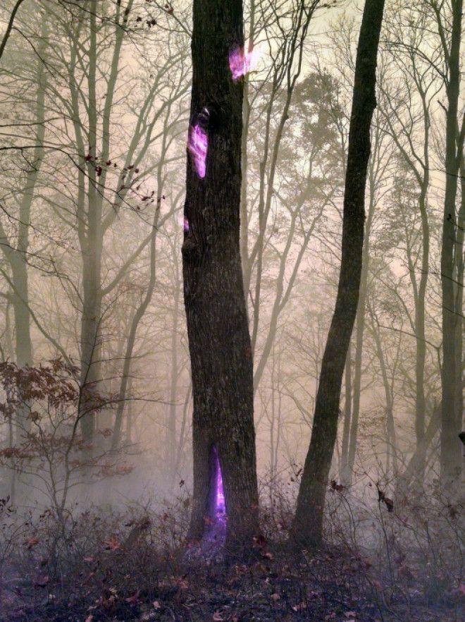 Дерево горящее изнутри