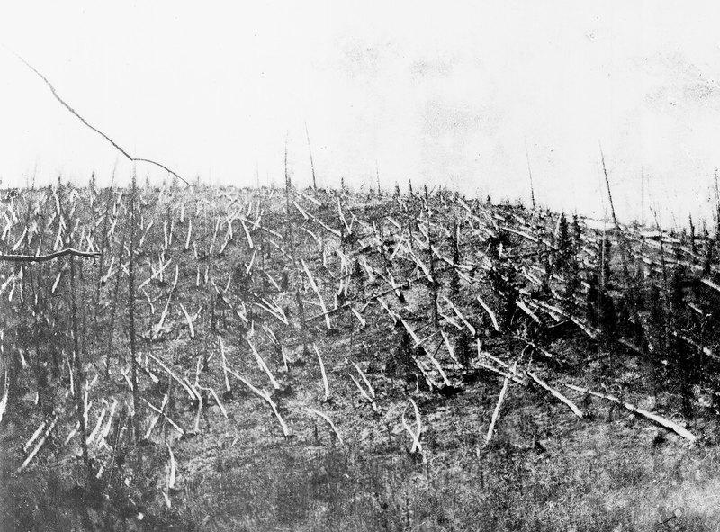 Лес, поваленный наместе падения Тунгусского метеорита. 1927 год