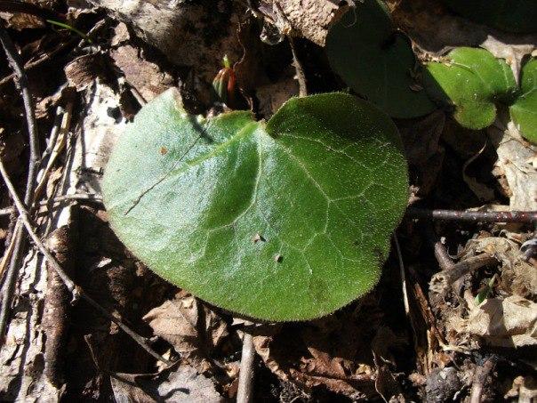 Съедобные весенние дикорастущие травы. Подножное питание весной