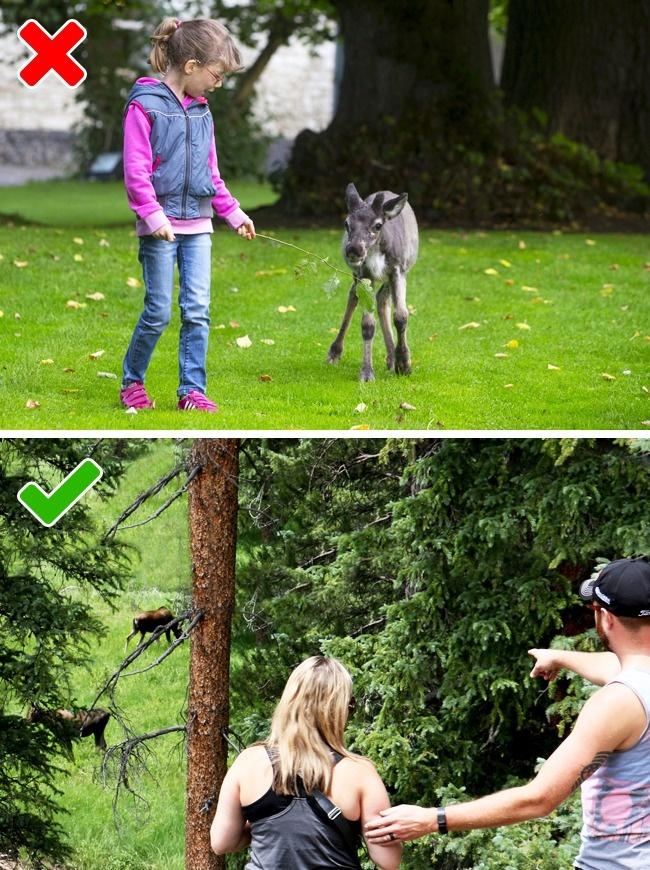Как вести себя при неожиданной встрече с животными