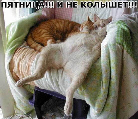 Эти фото просто заставят вас улыбнуться)