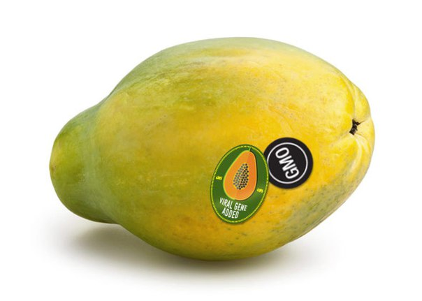 """papaya fruit thesis You'll know the papaya bars are done when the filling so i decided """"i'll just walk down to the corner produce store and get some fruit"""" well, i love papaya."""