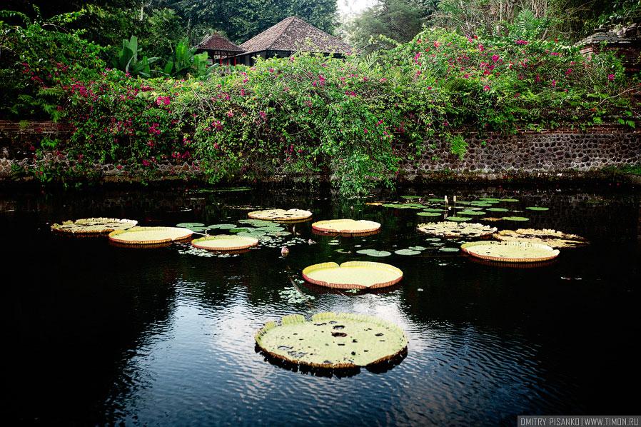 Водный дворец Тиртаганга на Бали
