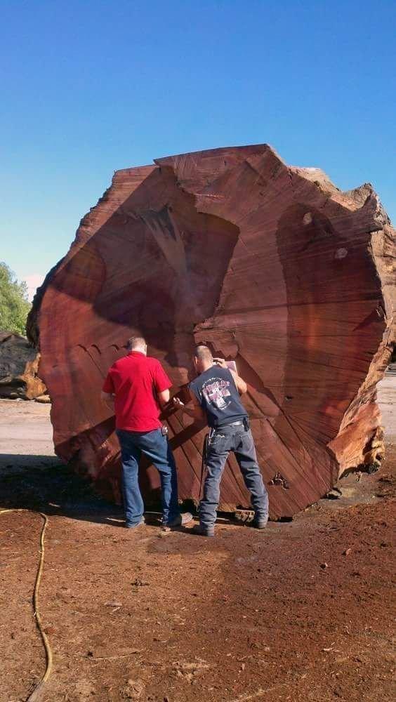 Из чего сделать Буратино, который не сгниет, пуля не пробьет и будет стоить как Боинг? деревья, древесина, интересное, природа, факты