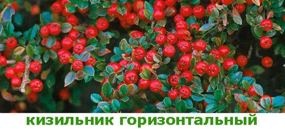 kizilnik-gorizontalnyj