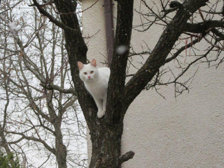 Бездомный кот единожды решил…