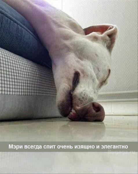 Милые и забавные собачки животина