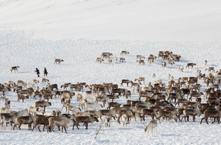 Прогулка по Ямало-Ненецкому автономному округу