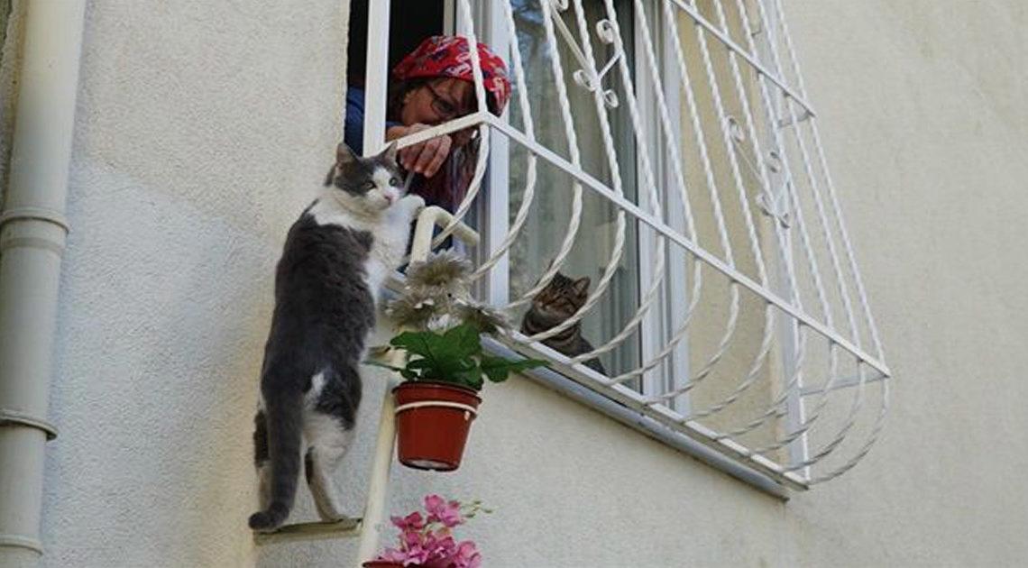 Женщина сделала лестницу, чтобы бездомные кошки могли прятаться в ее доме во время холода