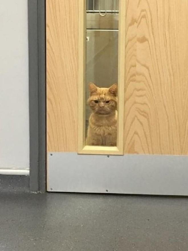 «Не такой, как все»: рыжий котик с угрюмой мордочкой выглядит так не по своей вине