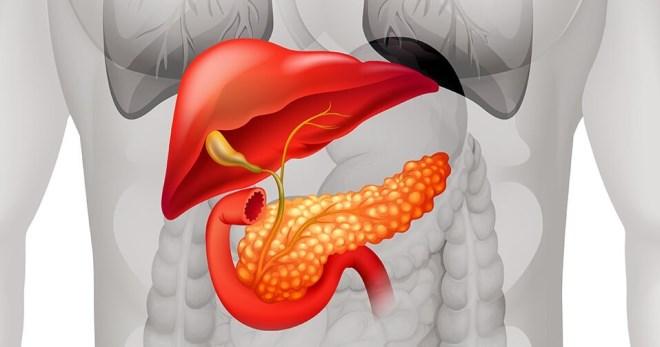 Гормоны поджелудочной железы – функции и особенности инсулина и не только