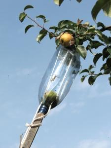 Пластиковая бутылка для дачных нужд