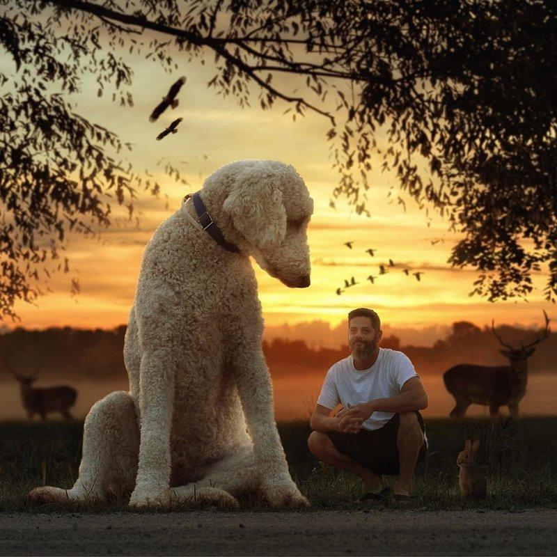 Сказочная жизнь мастера Фотошопа со своим «двухметровым» голдендудлем в мире, забавно, люди, собака, фотошоп