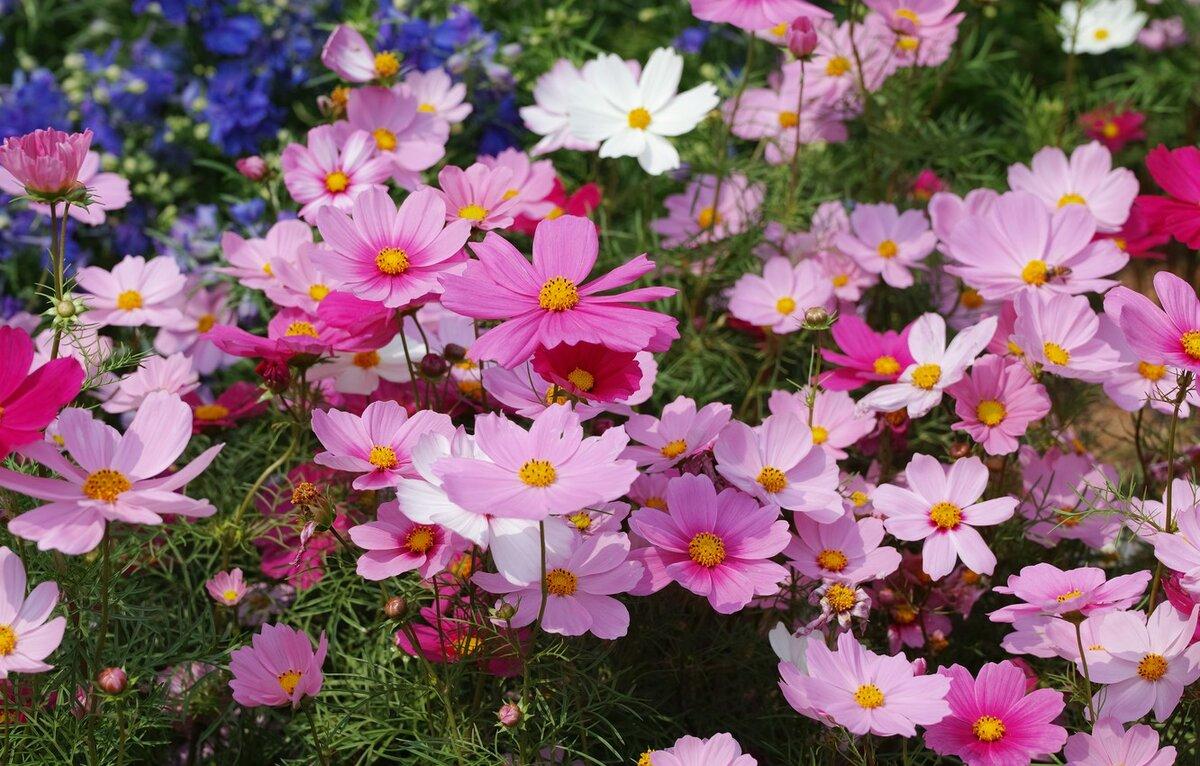 Цветок из детства