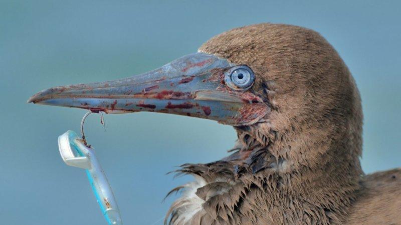 Фотограф спас птицу, запутавшуюся в рыболовных снастях дикая природа, история, история спасения, помощь животным, птица, птицы, экология