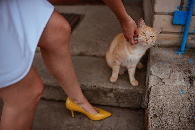 Кошек нельзя отгонять, когда они трутся об тебя НЕЛЬЗЯ, Они, когда, кошек, об тебя, отгонять, трутся