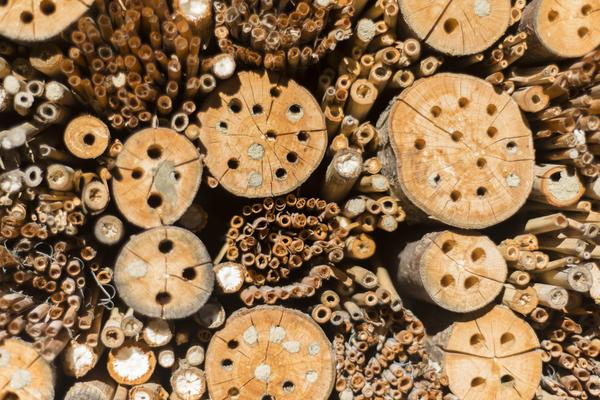 Соорудите для полезных насекомых самодельные домики