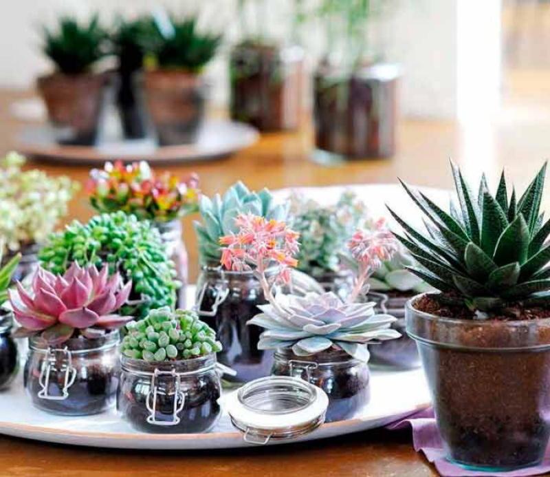 8 растений, которые можно оставить без полива на месяц комнатные растения