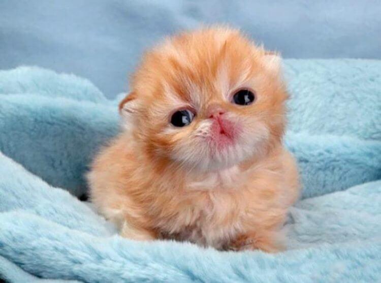 Котята невероятной милоты