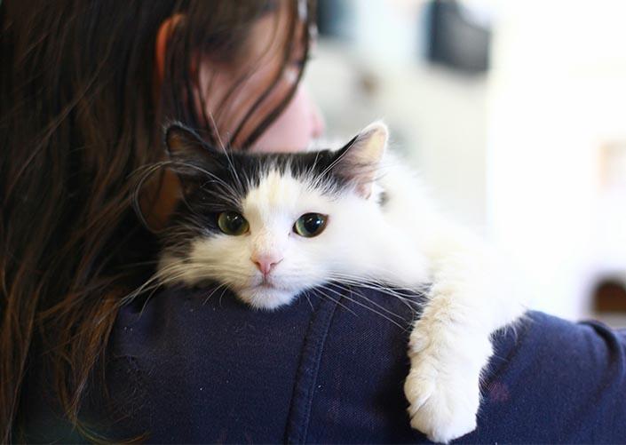 Работа мечты – «обниматель» кошек в ветеринарной клинике