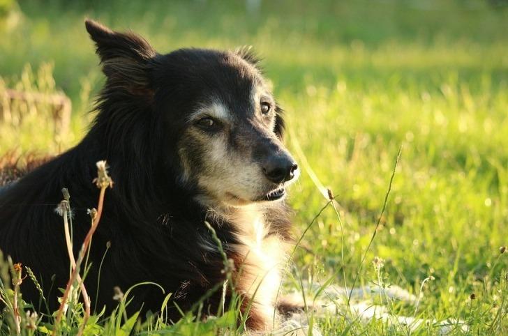 История о том, как собаки сл…