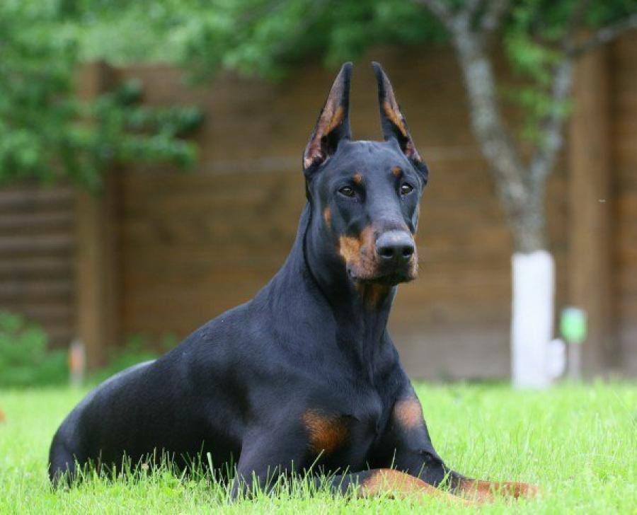 Собака-бюрократ